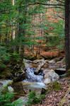 White Mountains  Fall Foliage  224