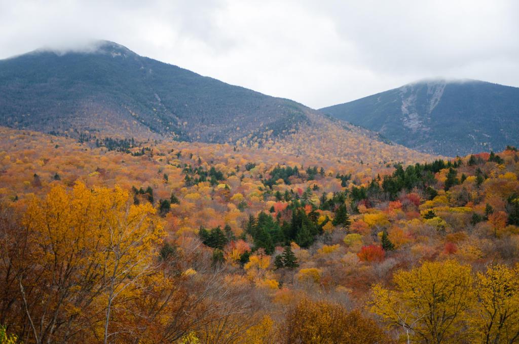 White Mountains  Fall Foliage  099 by FairieGoodMother