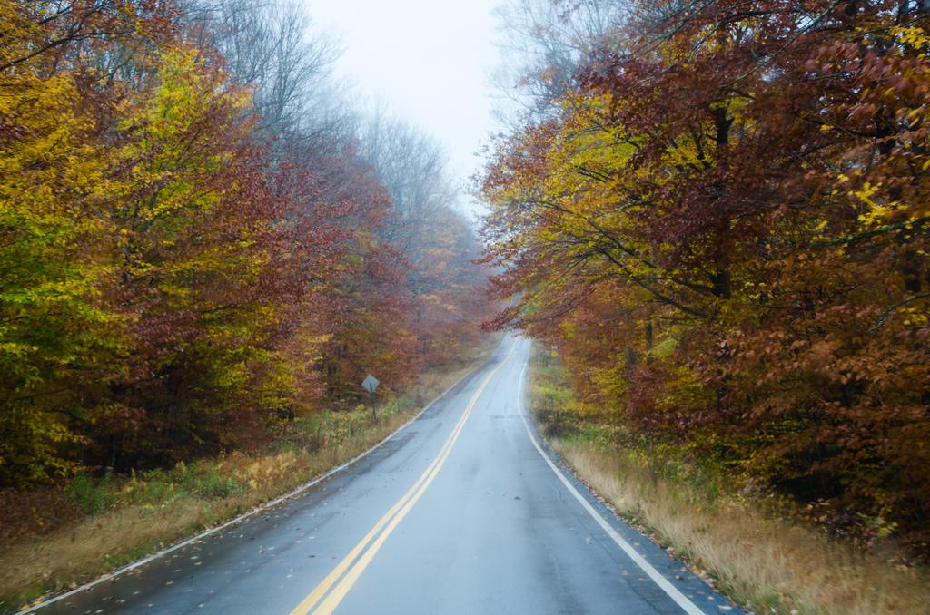 White Mountains  Fall Foliage  001 by FairieGoodMother