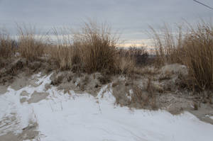 Cape May Frozen by FairieGoodMother