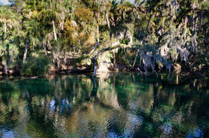 Florida Blue Springs by FairieGoodMother