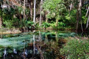 Florida  Rainbow Springs by FairieGoodMother