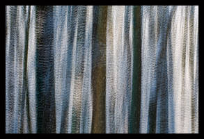 Winter Woods Abstract by joerossbach