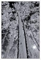 Jack Frost by joerossbach