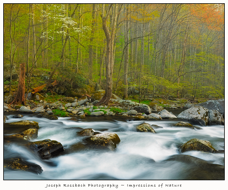 Smoky Mountain Spring Stream by joerossbach
