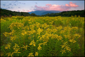 Goldenrod Below Washington by joerossbach