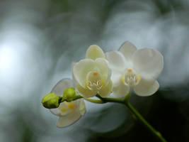 Flowers by zippoman1234
