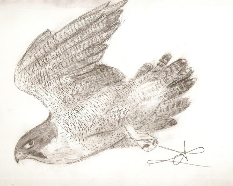 Peregrine Falcon by ArtsMermaid