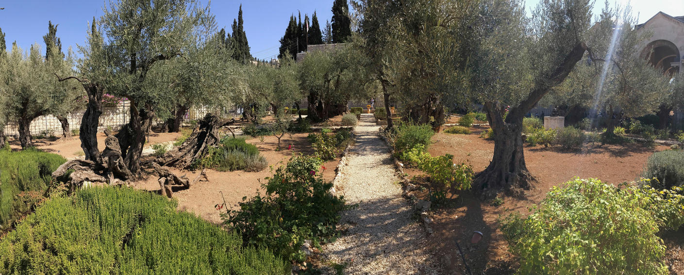 Garden of Gethsemane, Mount of olives by Gilberto694277 on DeviantArt