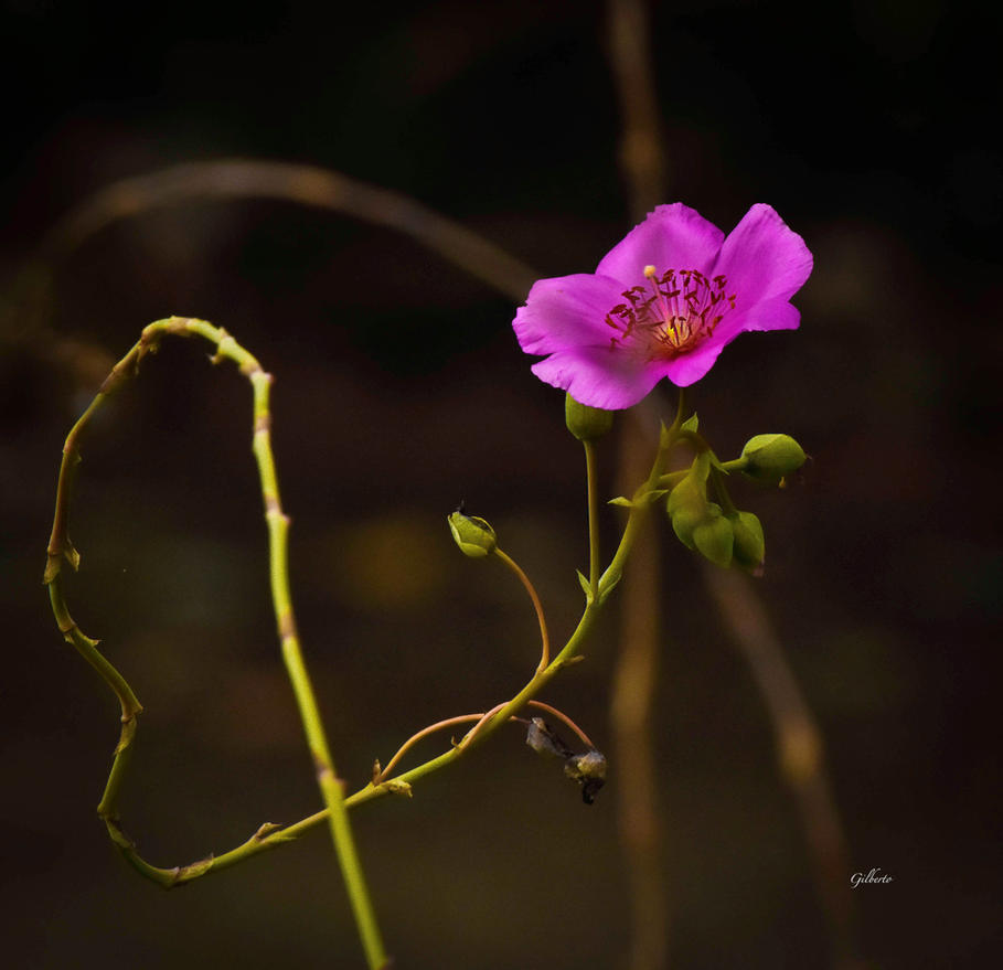 Beautiful flower by gilberto694277 on deviantart beautiful flower by gilberto694277 izmirmasajfo