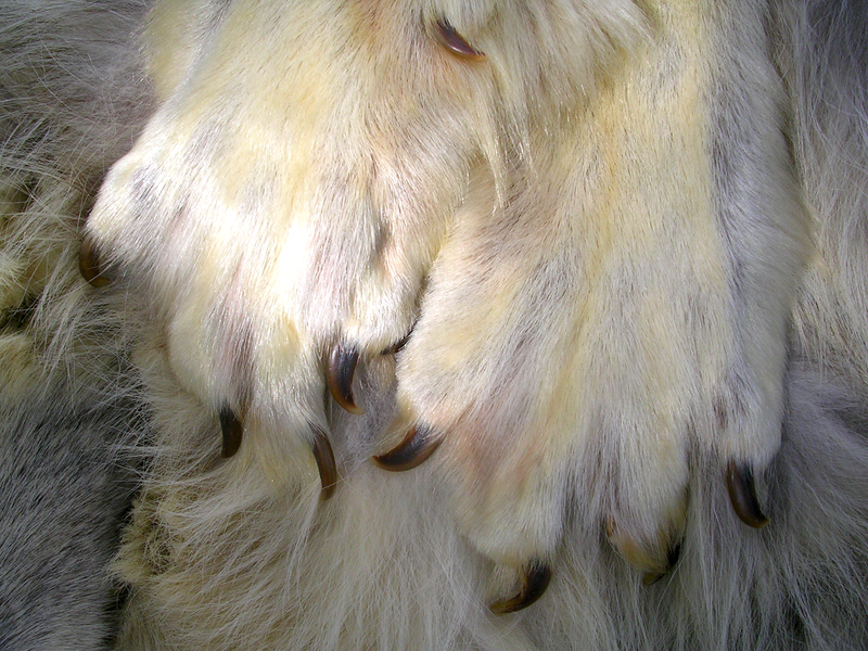 Wolf Paws - Close Up by FossilFeather on DeviantArt