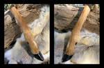 White-Tailed Deer Leg