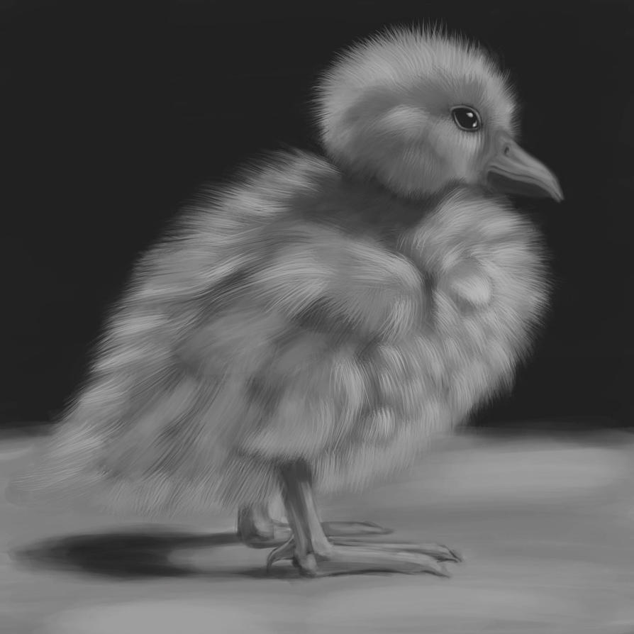 Duck Study by Xanathin