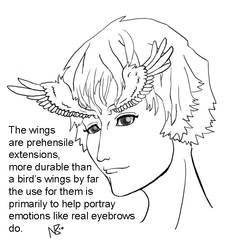 wing brows