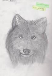 Grey Wolf by CherryCheese