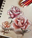 28/365 -Roses