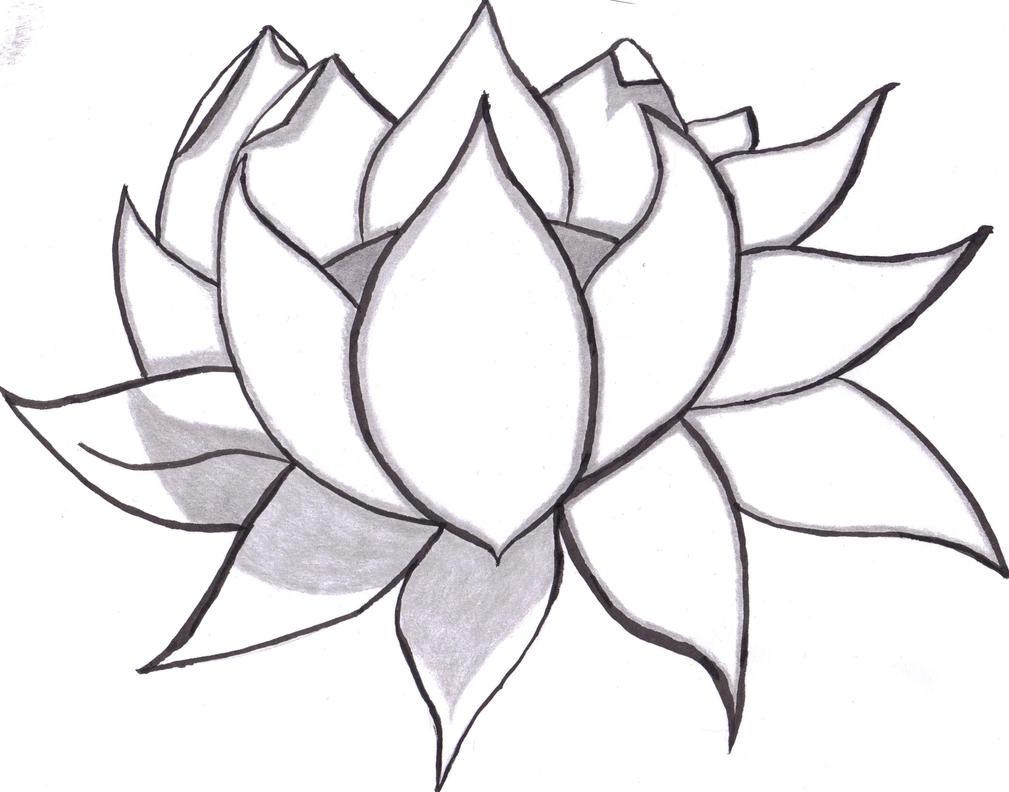Lotus Flower D...