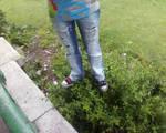 walking on bushes