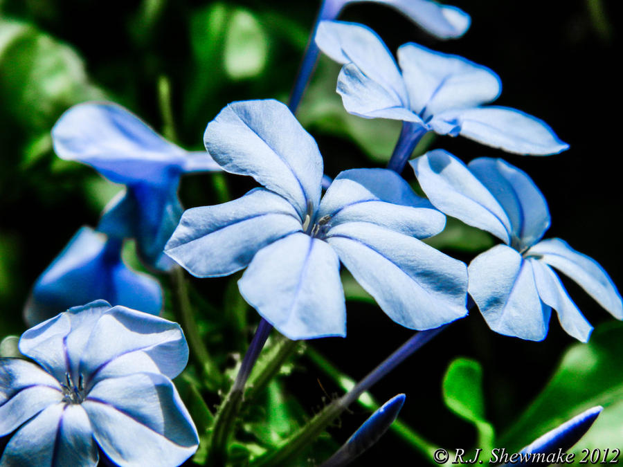 Pastel Blue by RJShewmake