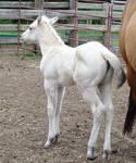 Foal 9