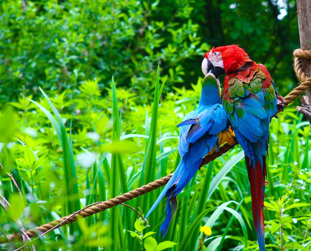Lovebirds by Drummyralf