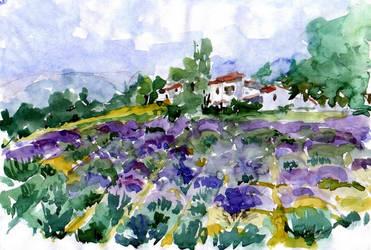 Provence - Lavander field by lapoall