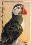ACEO: Atlantic Puffin