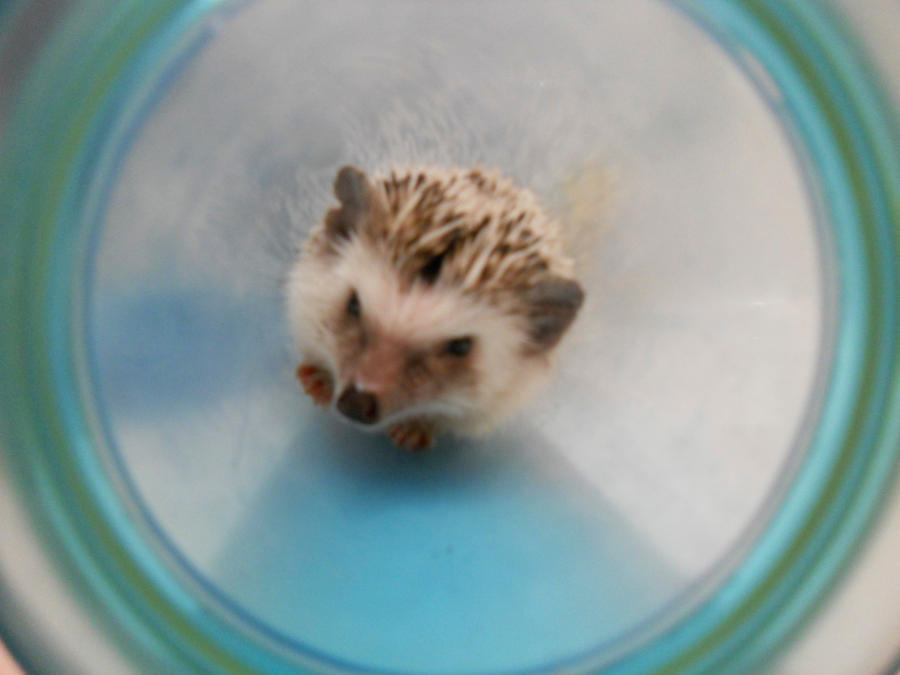 Put Her Out Put Her Out 29569094 furthermore How do i get my newborn to sleep for longer also Nba Memes likewise My Pet Hedgie In A Tube 307938136 also Chandra Wallar Says No Thanks To Oc Dysfunction. on are you gonna crawl my way