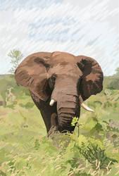 Elephant by Cornish-Ninja