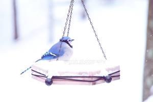 blue by gerrish