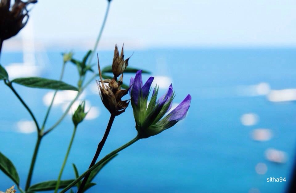 a flower and the sea by sitha94
