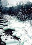 Zima 55