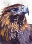 Ptaki 14
