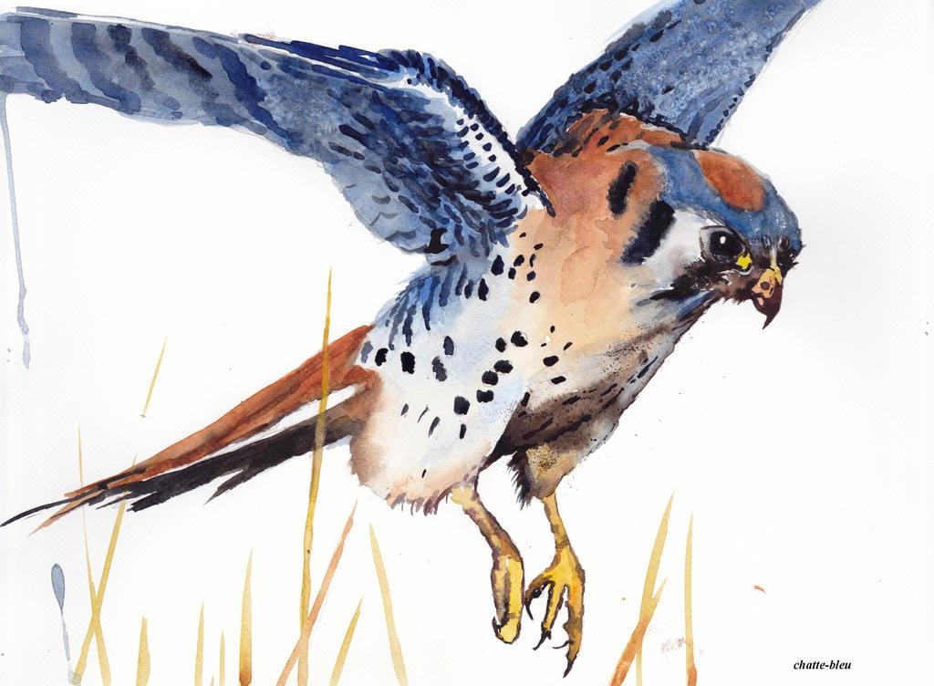 Ptaki 19
