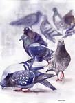 Ptaki 21