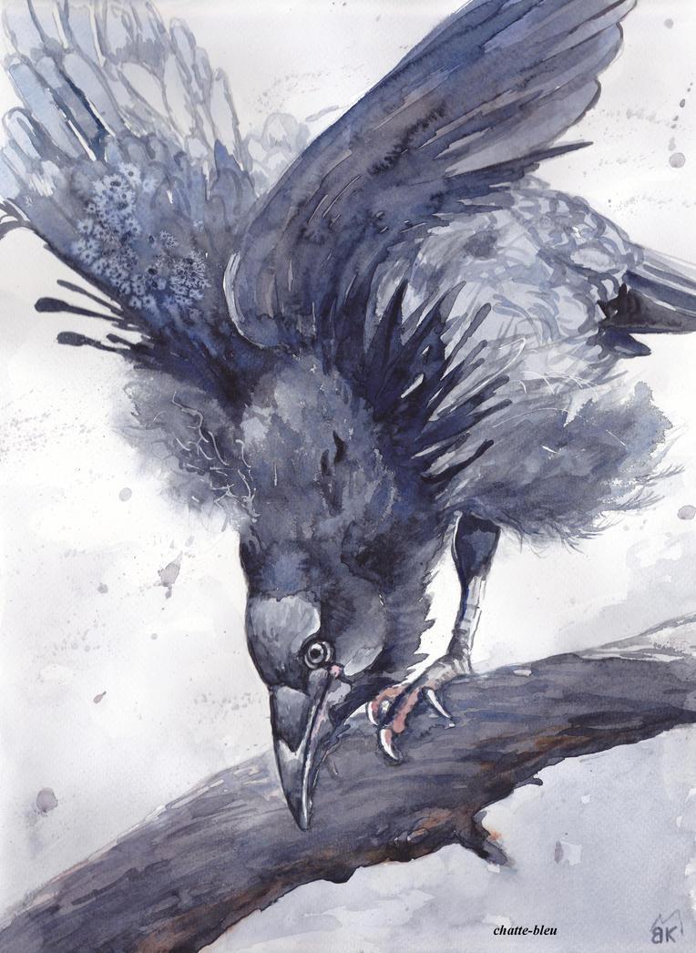 Ptaki 22 by chatte-bleu