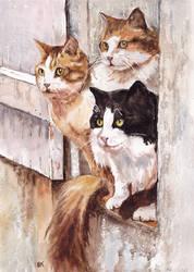Koty 63