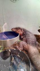 Happy Lizard