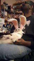 Unhappy Bunnycat