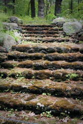 Moss Steps by missbunny
