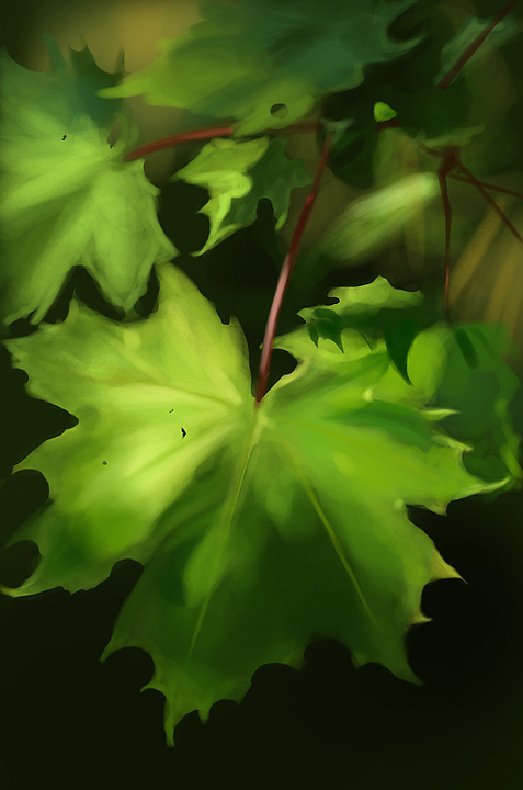 [Image: maple_by_canoda-d4st8n2.jpg]