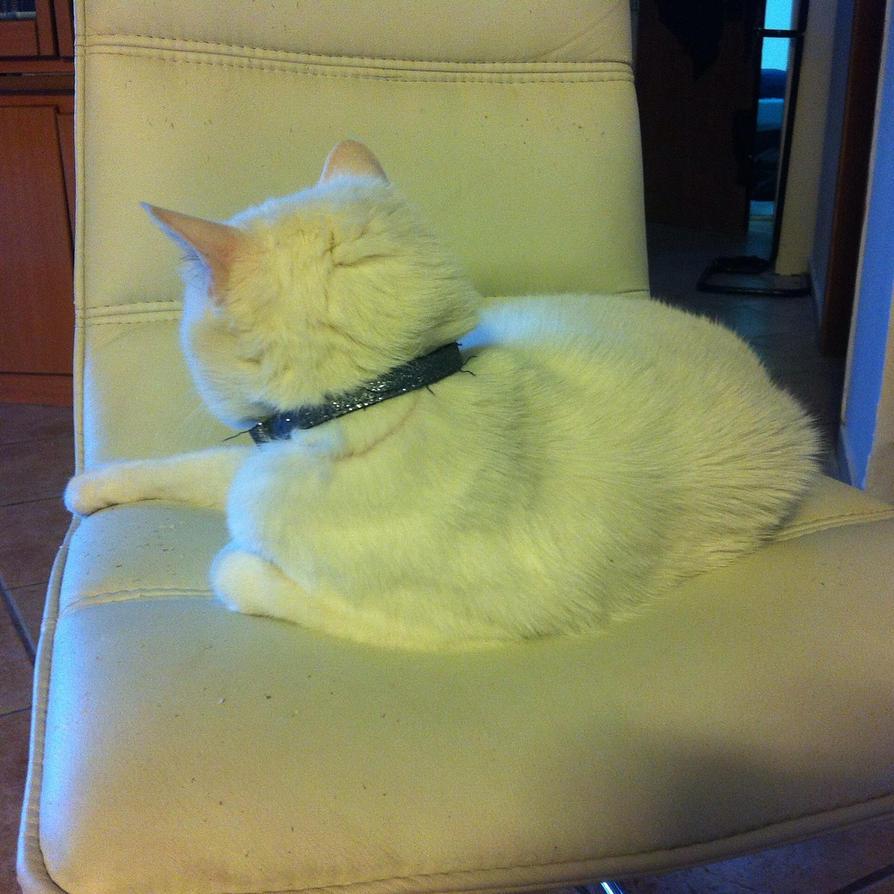 Blanckie My Cat by C5000-MakesStuff