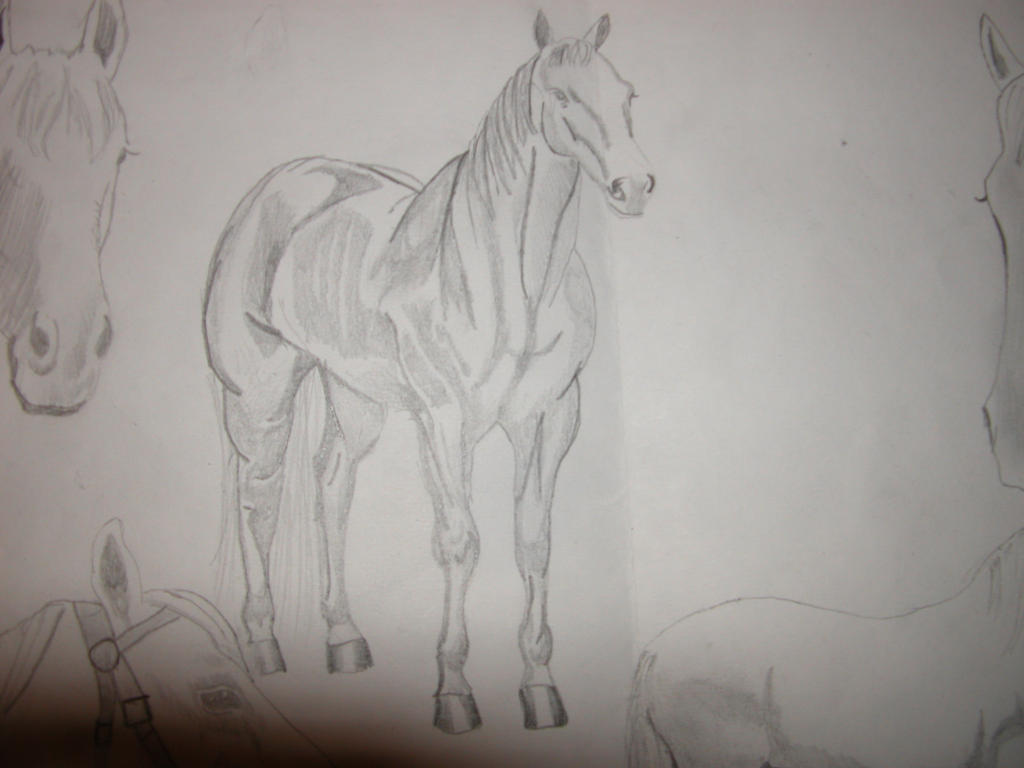 how to draw a horse from the front