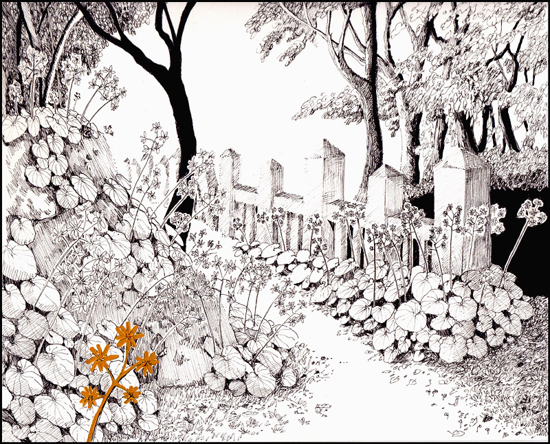 Farfugium Japonicum by SineSquared