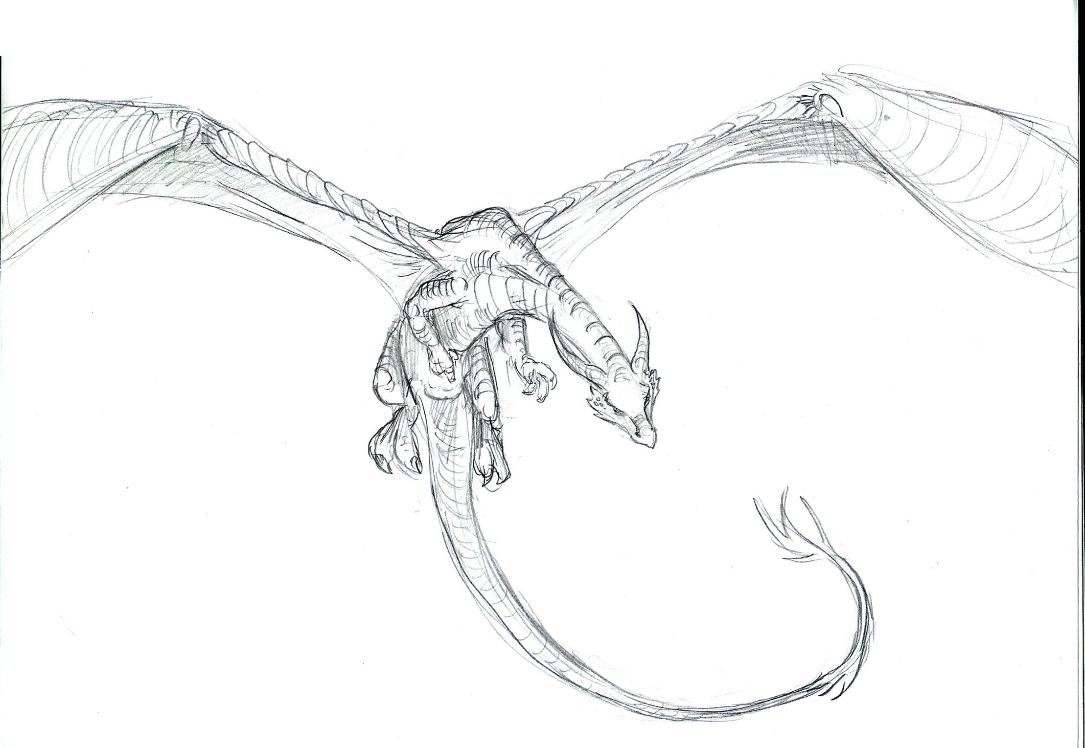 Dragon flying and breathing fire drawing dragon flying and breathing fire drawing photo27 ccuart Image collections