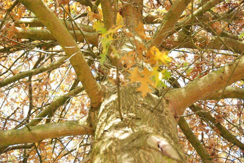 tree :D by danya0626
