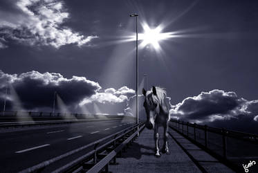 Horse on the Street