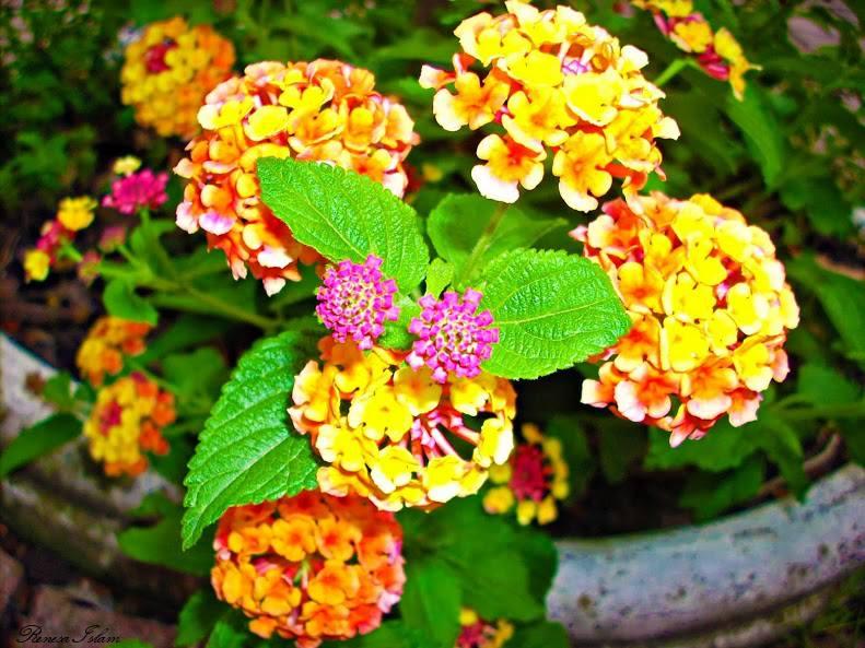Flower 15 by pigiama