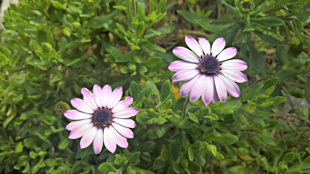 Flowers 65 by pigiama