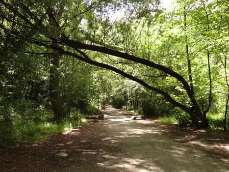 Path 19